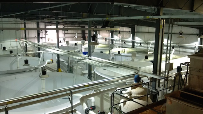 World's first BAP-certified hatchery to get an upgrade - www