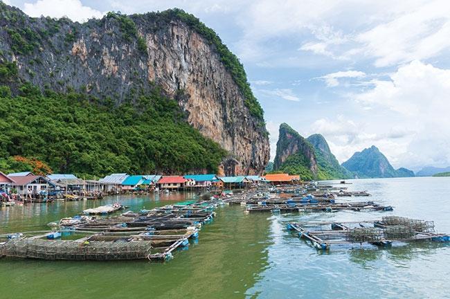 Strengthening Thailand's shrimp farmers - www hatcheryinternational com